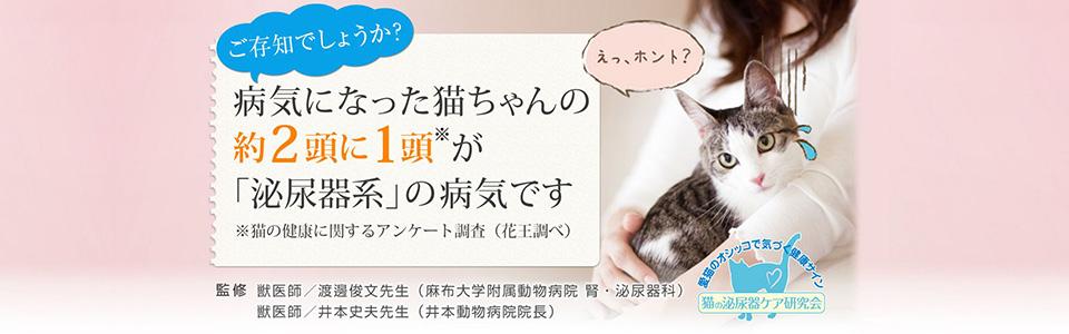 ご存知でしょうか?病気になった猫ちゃんの約2頭に1頭が「泌尿器系」の病気です